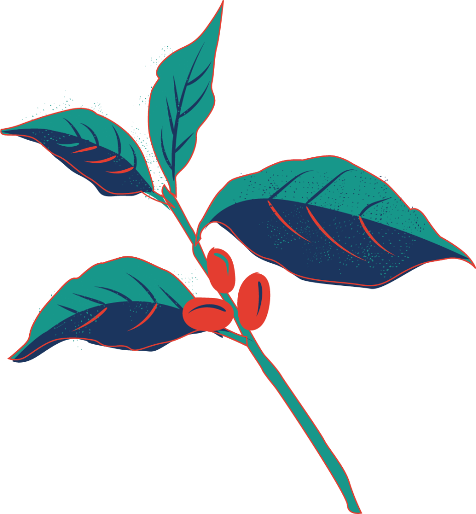 Peruvian Coffee Leaf with Coffee Beans