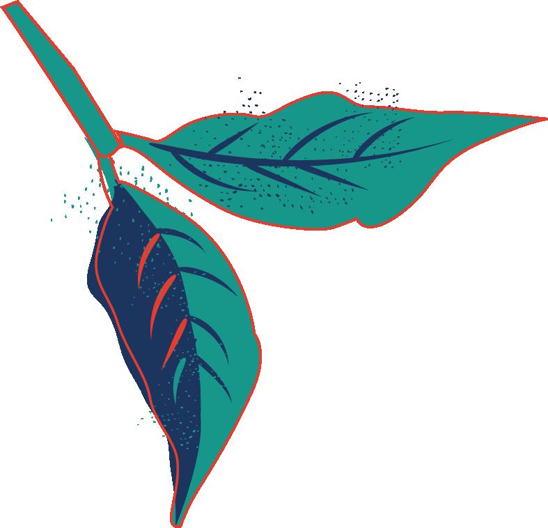 Coffee Leaf